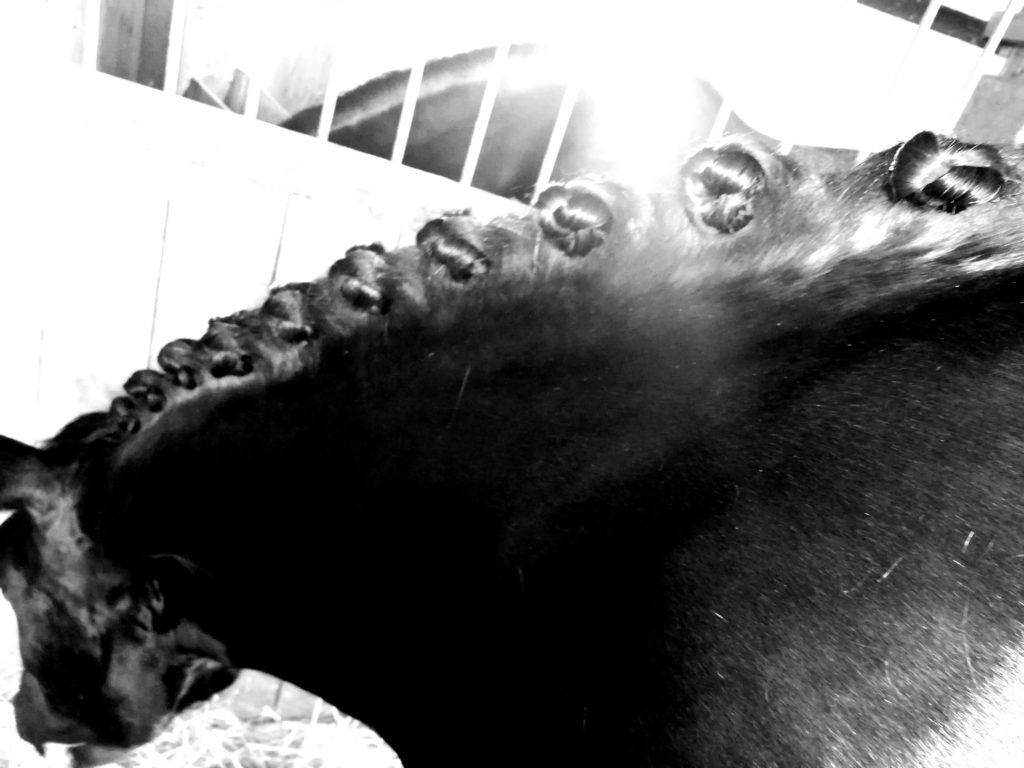 Geflochtene Pferdemähne